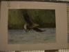 Конкурс рисунков Орлан - птица 2013 года