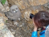 Elvira Nikoenko and nestling of the Eagle Owl