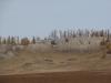 Гнездовой участок могильника