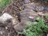 Nestlings of the Stepp Eagle