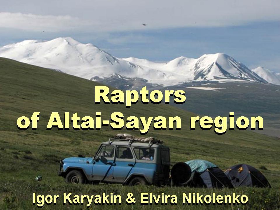 Пернатые хищники Алтае-Саянского региона