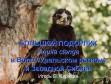 Большой подорлик в Волго-Уральском регионе и Западной Сибири