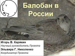 Балобан в России