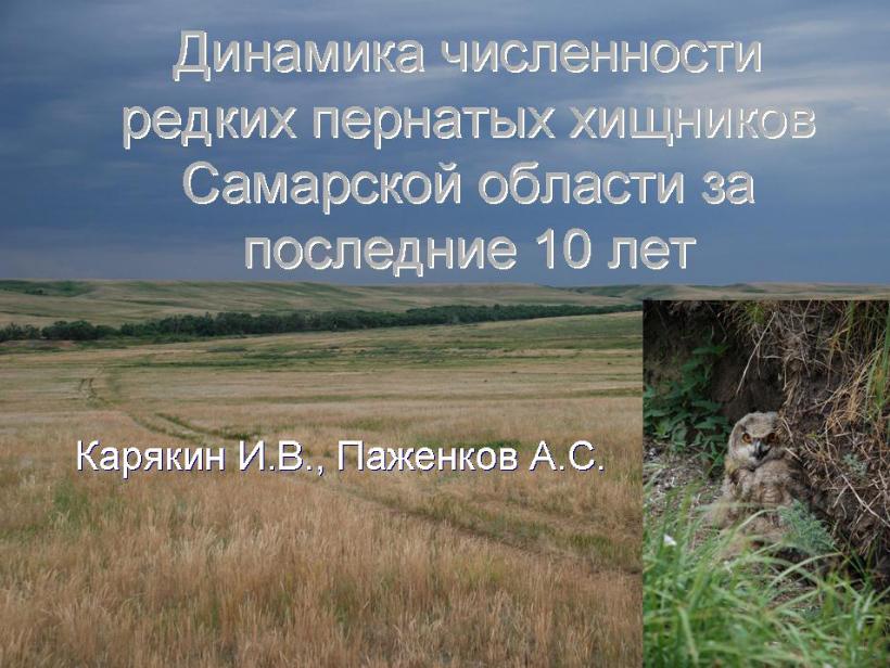 Редкие пернатые хищники Самарской области