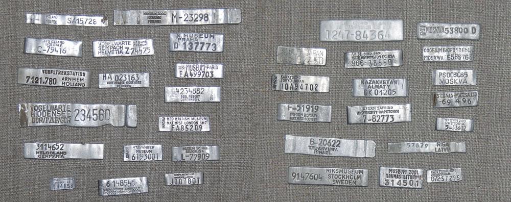 Образцы металлических колец различных национальных центров кольцевания птиц