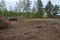 Вырубка в Завьяловском заказнике на гнездовом участке большого подорлика
