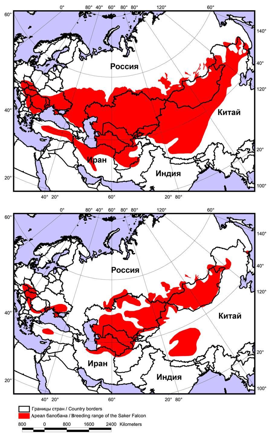 Динамика гнездового ареала балобана в конце ХХ века: в 60-70-х гг. ХХ столетия (вверху) и в 01–10 гг. XXI столетия (внизу)