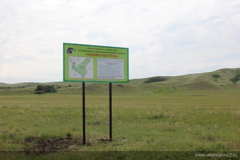 Заказник для степных орлов - Чарышская степь
