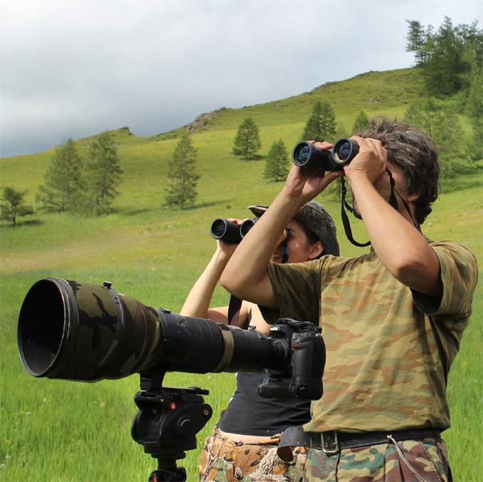 Наблюдение за хищными птицами