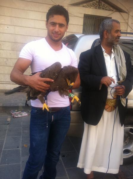Степной орёл B10 в Йемене