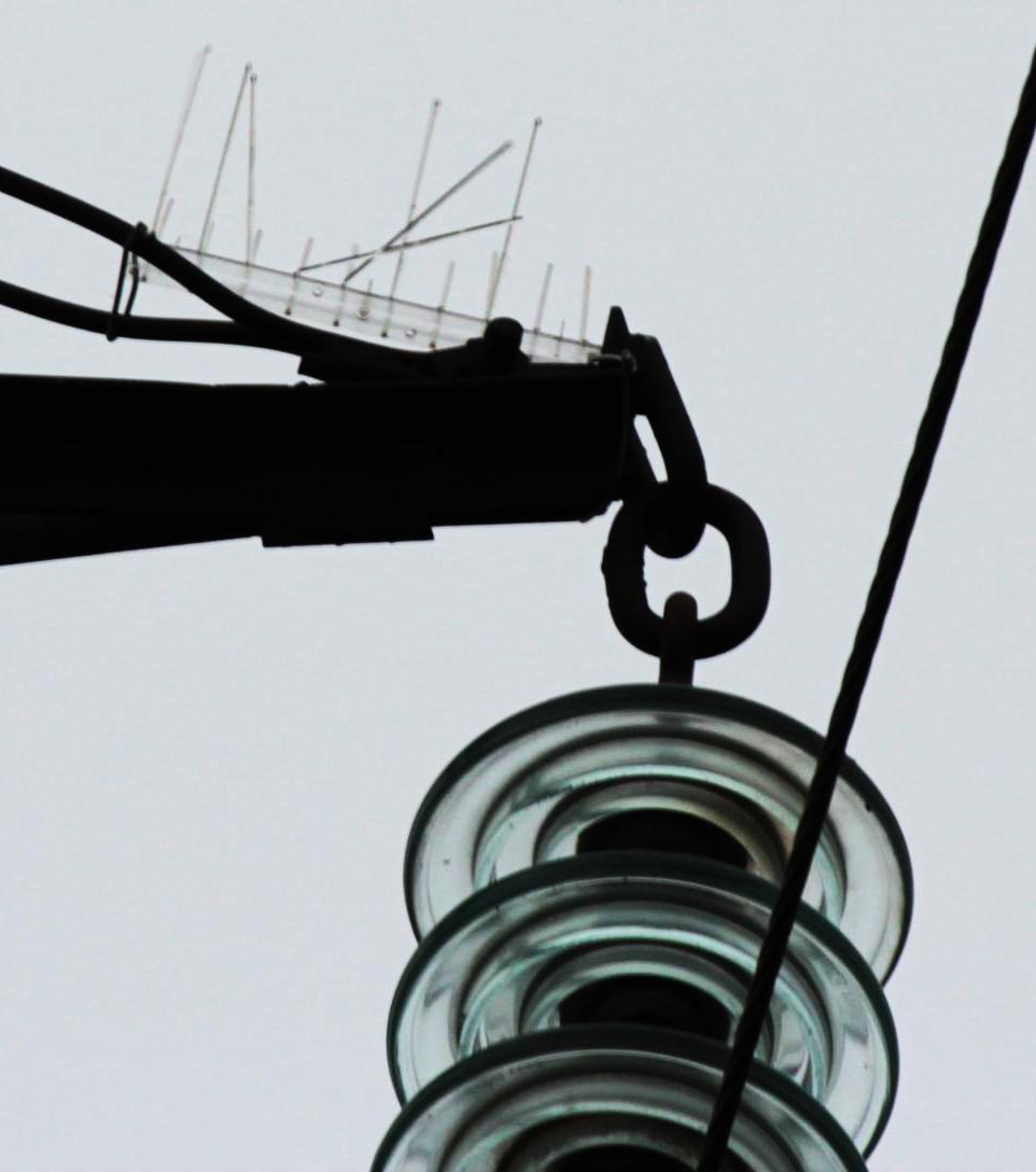 Ёж-стандарт - с поломанными иглами, явно после присаживания на него крупной птицы. Фото А. Салтыкова