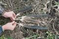 Останки орла-могильника. Фото Р. Бекмансурова