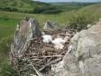 Гнездо степного орла с птенцами. Фото А. Барашковой