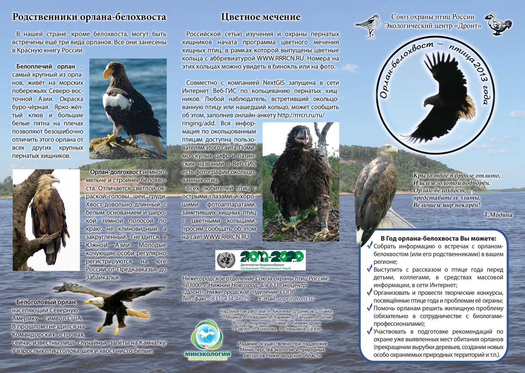 Буклет: орлан-белохвост - птица 2013 года. С.1