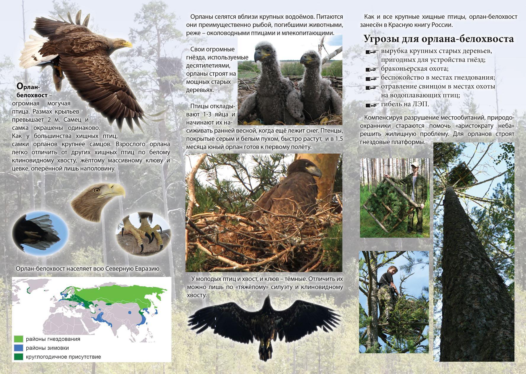 Буклет: орлан-белохвост - птица 2013 года. С.2.