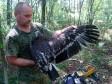 Гибридный подорлик. Фото с сайта Украинского центра исследований хищных птиц