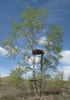 Платформа на дереве
