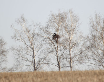 Гнездо солнечного орла. Фото Р. Бекмансурова.