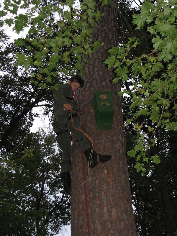 Игорь Карякин весит гнездовой ящик для мохноногого сыча на старой сосне. Фото А. Левашкина