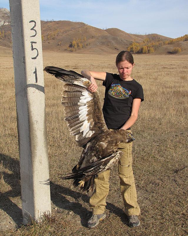 Анна Барашкова с самкой степного орла, погибшей на ЛЭП. Фото И. Карякина.