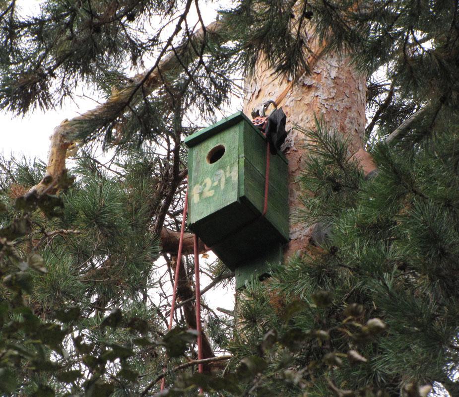 Гнездовой ящик для мохноногого сыча. Фото И. Карякина
