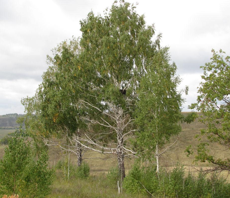 Естественное гнездо могильника над долиной Сока. Фото И. Карякина