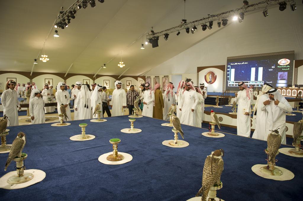 Большая часть соколов, выставляемых на конкурсы на фестивалях сокольников в арабских странах - балобаны из Алтае-Саянского региона