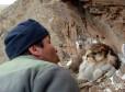 Евгений Потапов целуется с самкой тибетского балобана. Фото Ма Минга