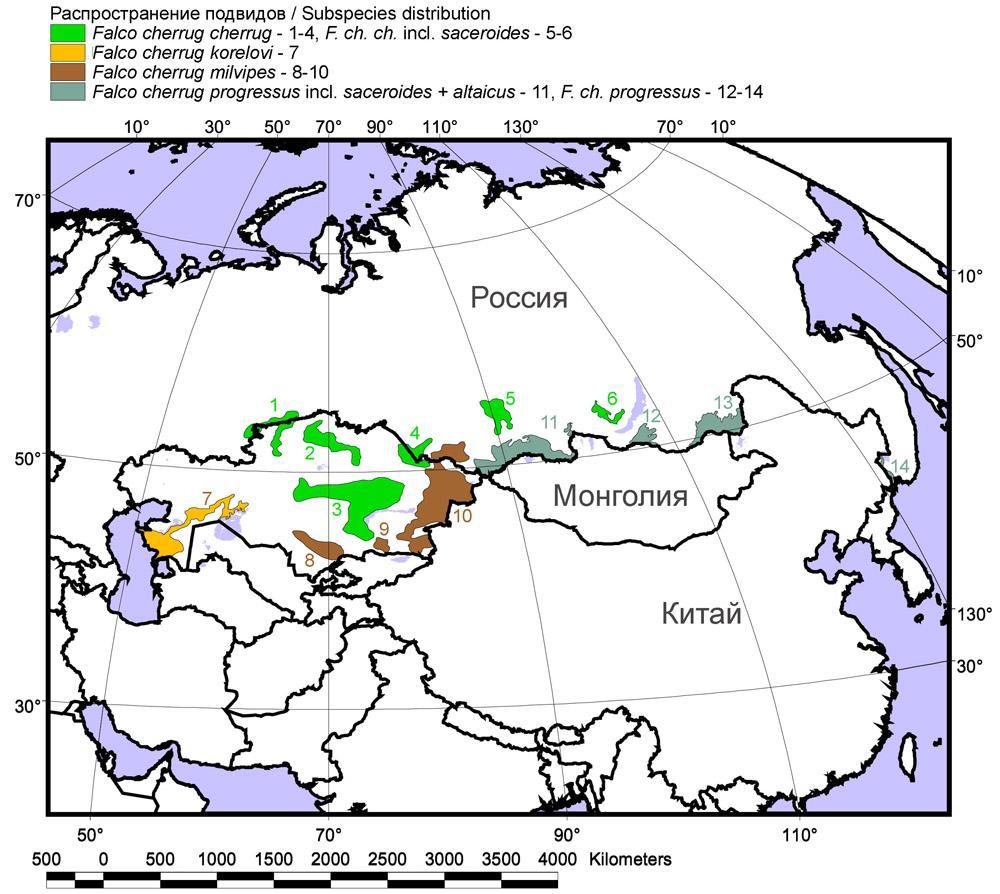 Современный гнездовой ареал балобана в России и Казахстане
