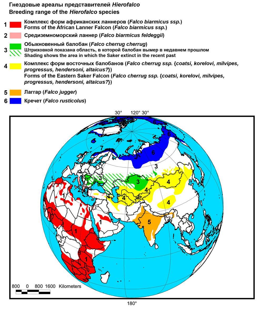 Распространение балобана и других видов комплекса Hierofalco. Из: Пфеффер, 2012