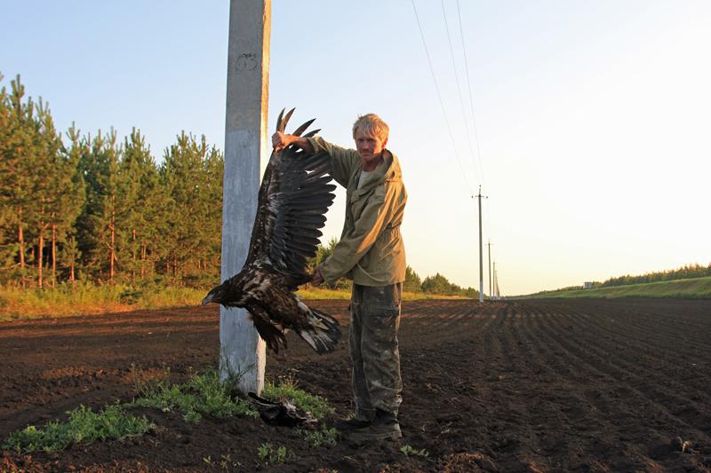Погибший орлан-белохвост. Июль2012 г. Спасский район