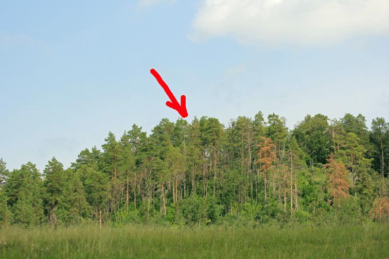 Пример расположения гнездового участка орла-могильника, где необходимо создание ОЗУЛ. Заинский район
