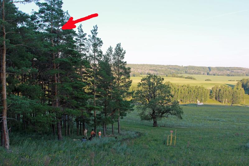 Пример расположения гнездового участка орла-могильника, где необходимо создание ОЗУЛ. Бавлинский район