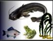 Биоразнообразие наземных и водных животных и зооресурсы