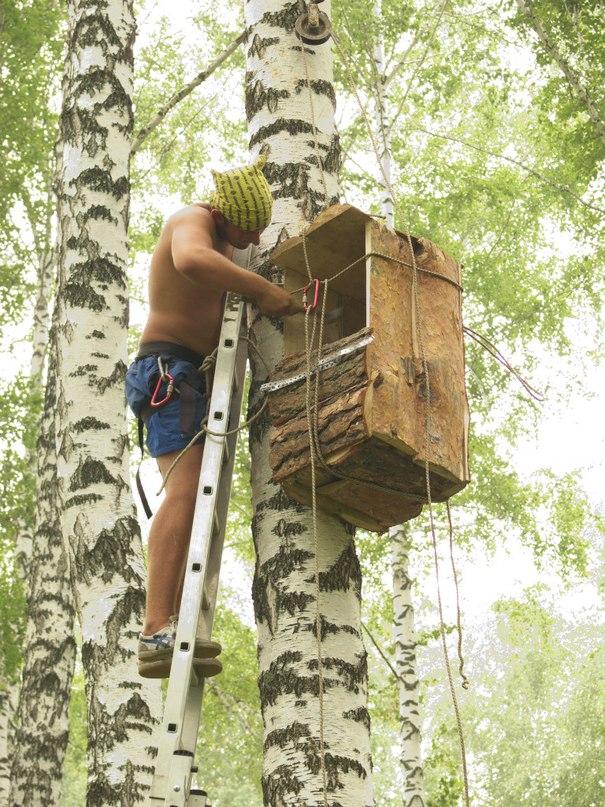 Последний штрих в изготовлении дома для совы - прибивание к дереву по финской технологии