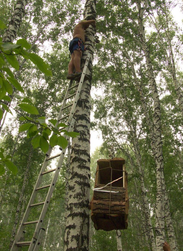 Подъём дуплона на дерево - дело не легкое