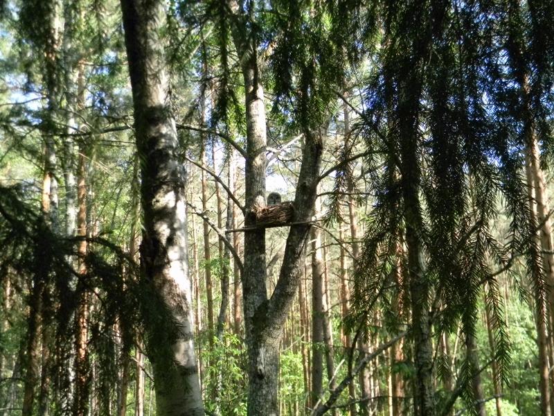 Вид на гнездо-корзину. Автор Александр Иванов