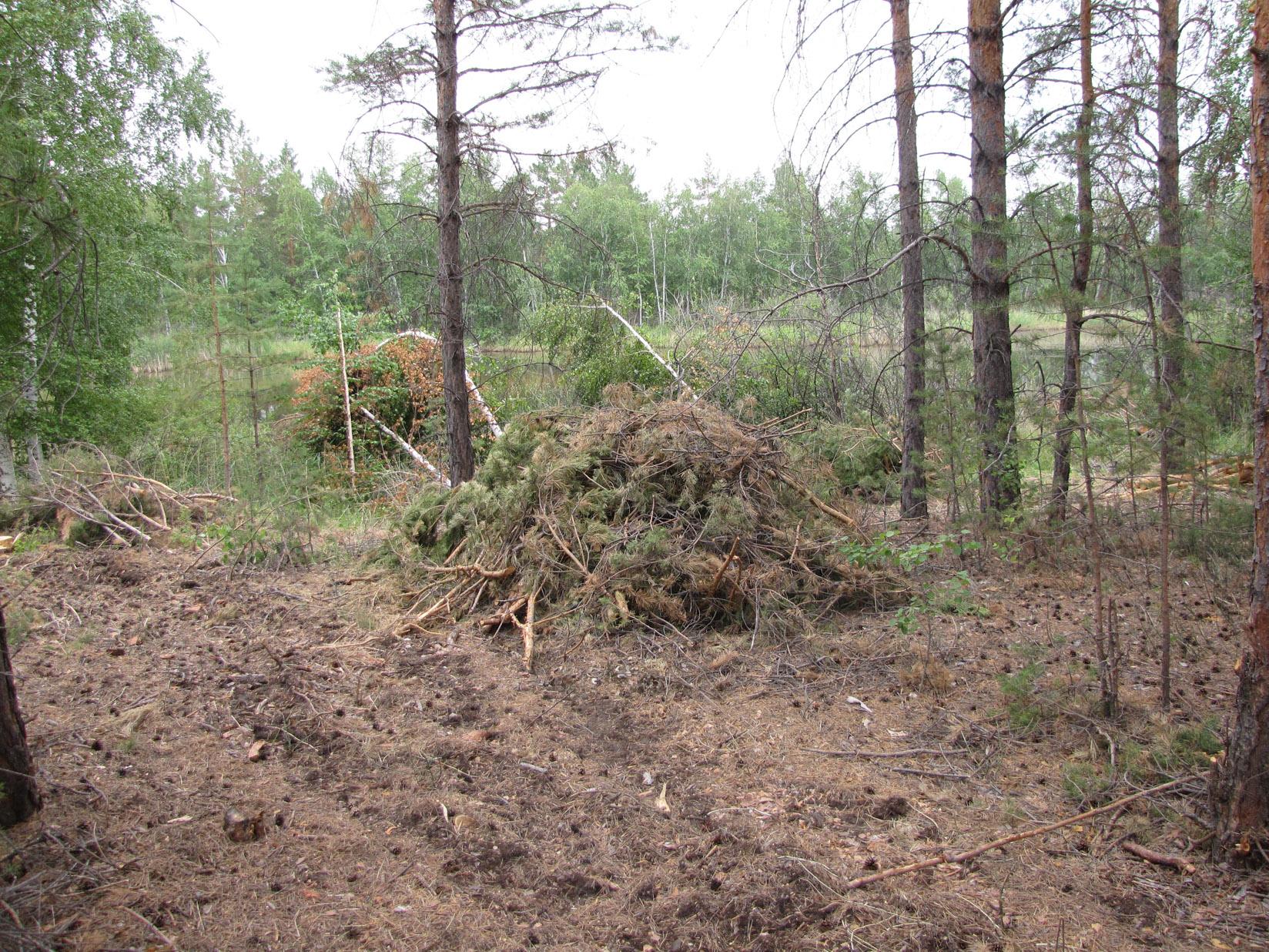 Рубки на гнездовом участке большого подорлика в водоохранной зоне в Завьяловском заказнике. Фото И. Карякина