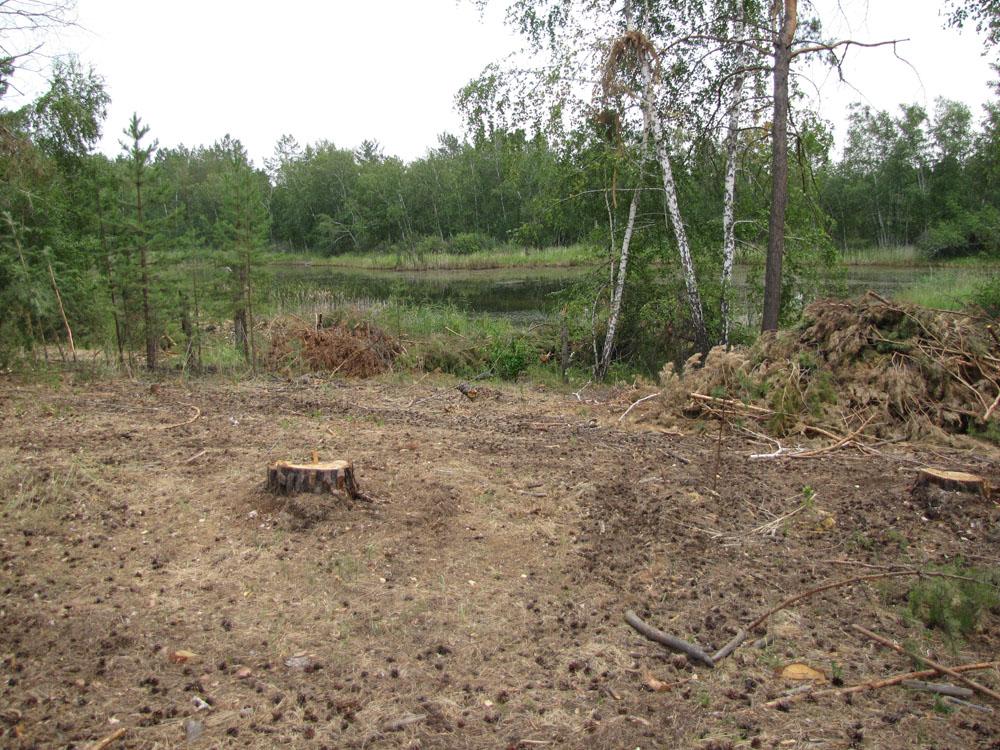 Бывший гнездовой участок большого подорлика - здесь мог бы быть создан особо-защитный участок леса. Фото И. Карякина
