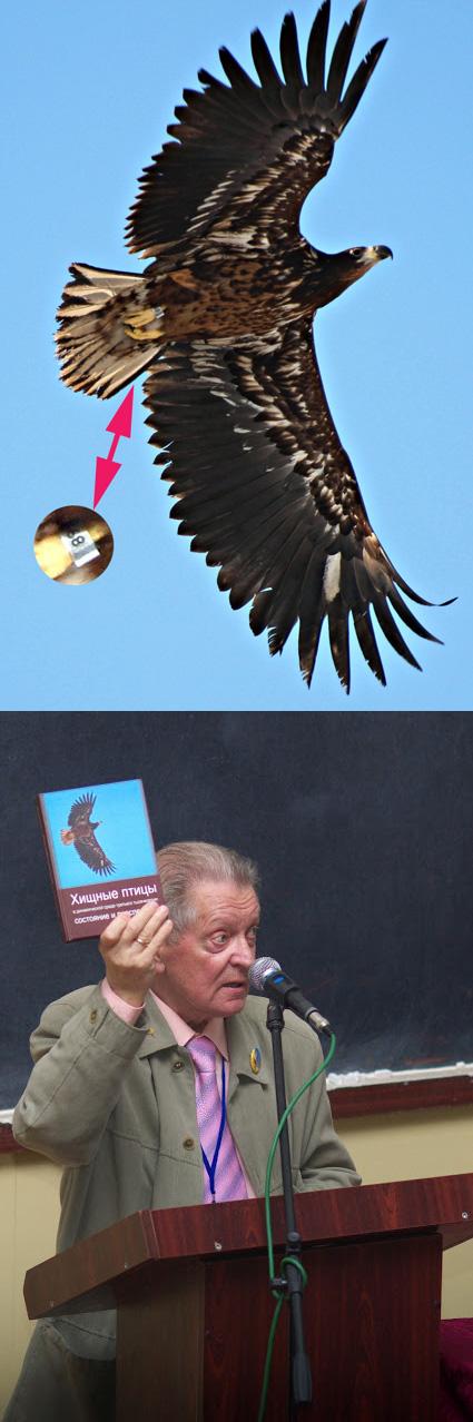 Молодой орлан, окольцованный в рамках программы мечения хищных птиц Российской сети изучения и охраны пернатых хищников в Татарии Ринуром Бекмансуровым, был сфотографирован Дмитрием Сычом в Украине под Киевом. Этот орлан стал символом VI Международной конференции по хищным птицам Северной Евразии