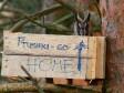 Ушастая сова в ящике. Автор Сергей Абрамчук