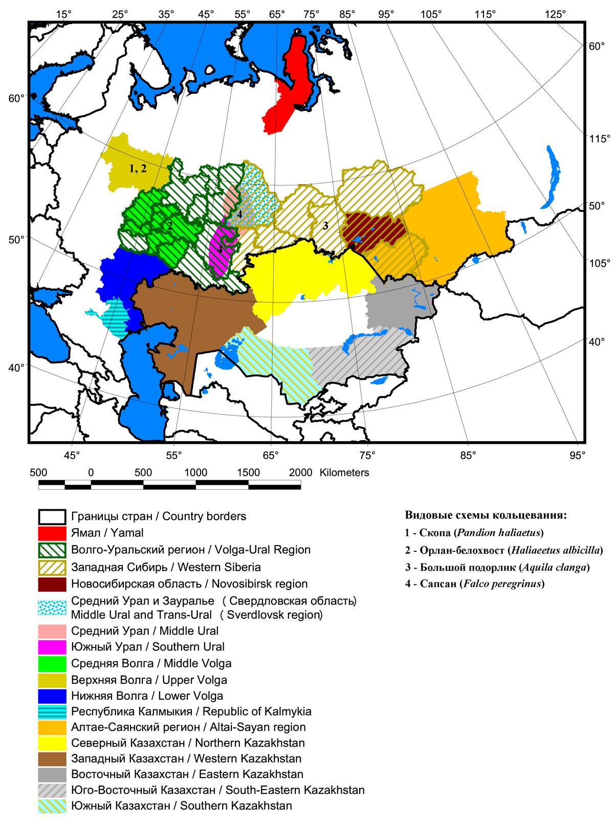Схемы цветного мечения хищных птиц в России и Казахстане