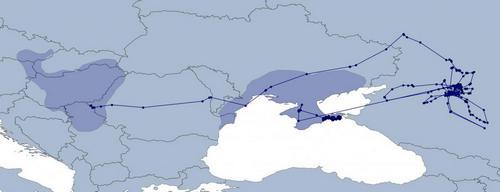 Схема миграционных перемещений самки балобана по имени Thea. Более темным оттенком схематически изображены ареалы двух гнездовых группировок балобана в Европе  (рисунок с сайта SakerLife News)