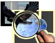 Веб-ГИС-ресурс WildLifeMonitoring