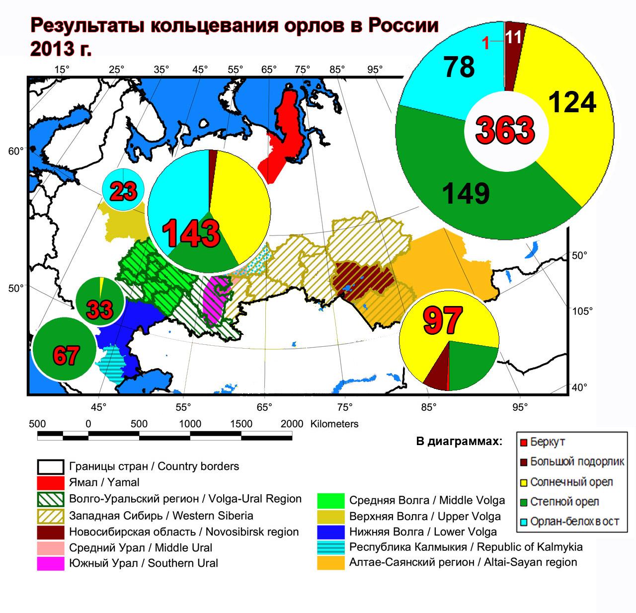 Результаты кольцевания орлов в России в 2013 г.