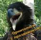С Днём орнитолога!