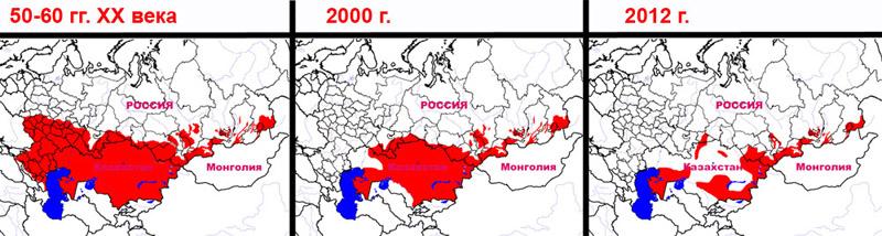 Сокращение ареала балобана за последние 60-70 лет в России и Казахстане