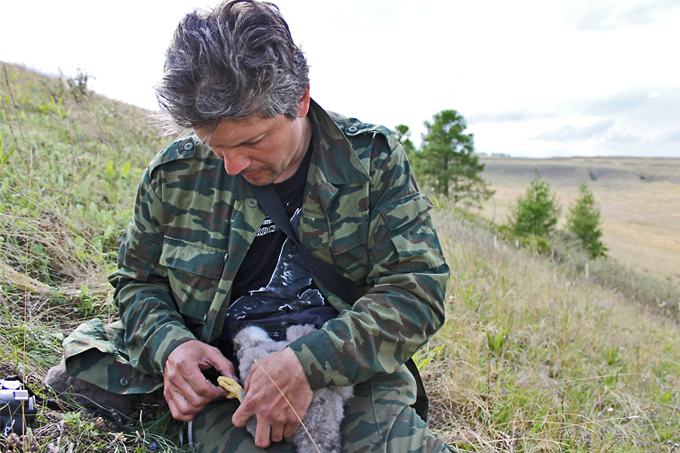 Игорь Карякин кольцует птенца мохноногого курганника