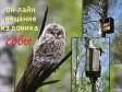 Он-лайн вещание из домика совы