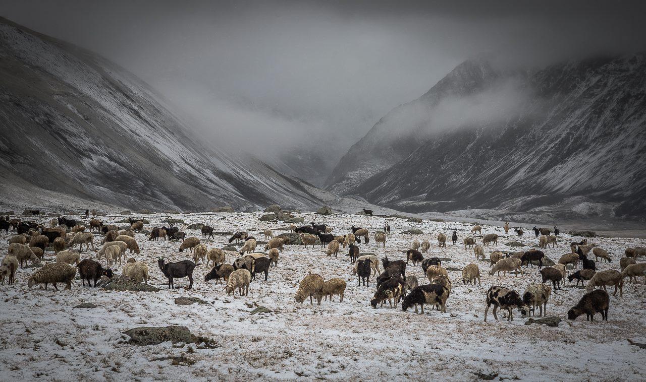 Снегопад 15 августа 2015 г. на р. Нарын-гол (хр. Чихачева, Алтай). Фото Алексея Эбеля